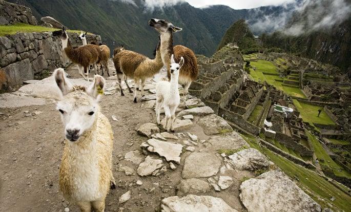 bigstock-Llama-Train-at-Machu-Picchu-P-34325654