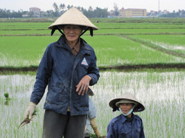Vietnam farmer's fields