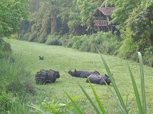 Tiger Tops Rhino Population
