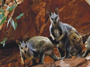 Wayoutback Safari