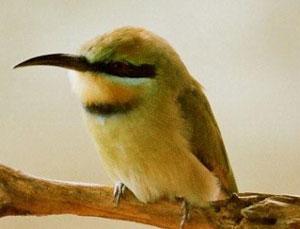 Bird Watchers Safari