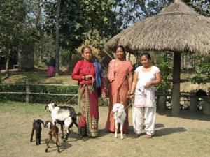 Goat Breeding Project