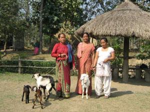 Goat Breeding Project
