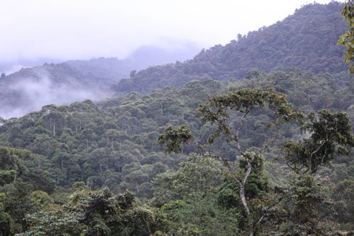 Ecuador Cloud Forest