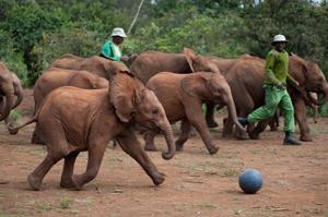 Orphan Elephants at Play