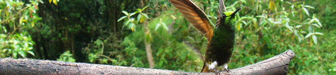Colombian Wildlife