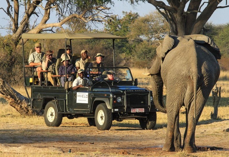 106 - Imvelo Safari Lodges - Camelthorn - Hwange Elephant are renowned for their good nature-1