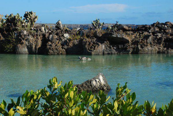 Darwin Bay Galapagos