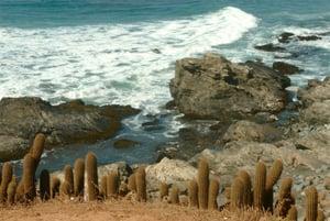 bigstock-Cactus-near-sea-29400251