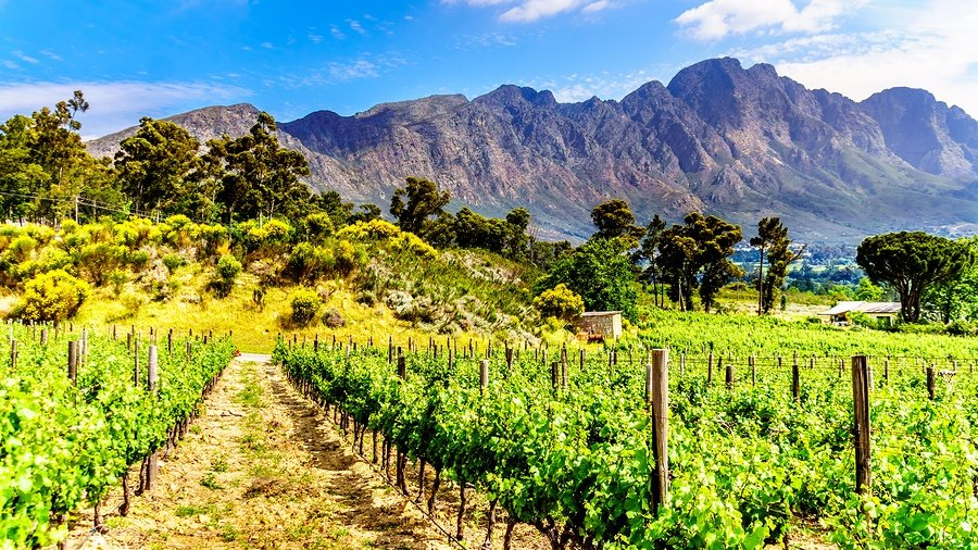 bigstock-Vineyards-Of-The-Cape-Wineland-231978310