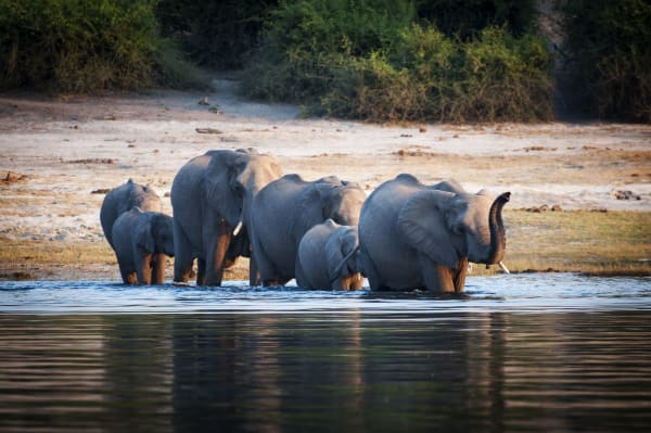 chobe-national-park-wildlife-elephant-19730