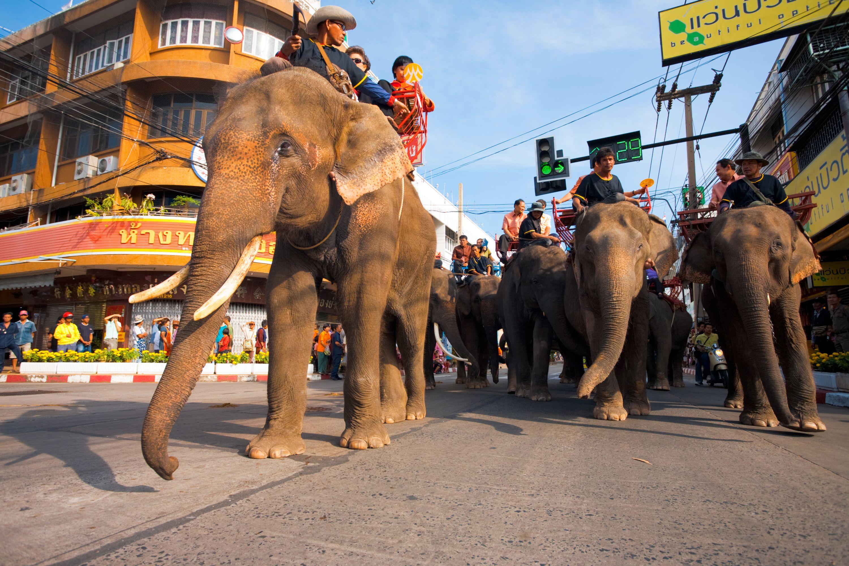 elephant-street-festival-surin-14054.jpg
