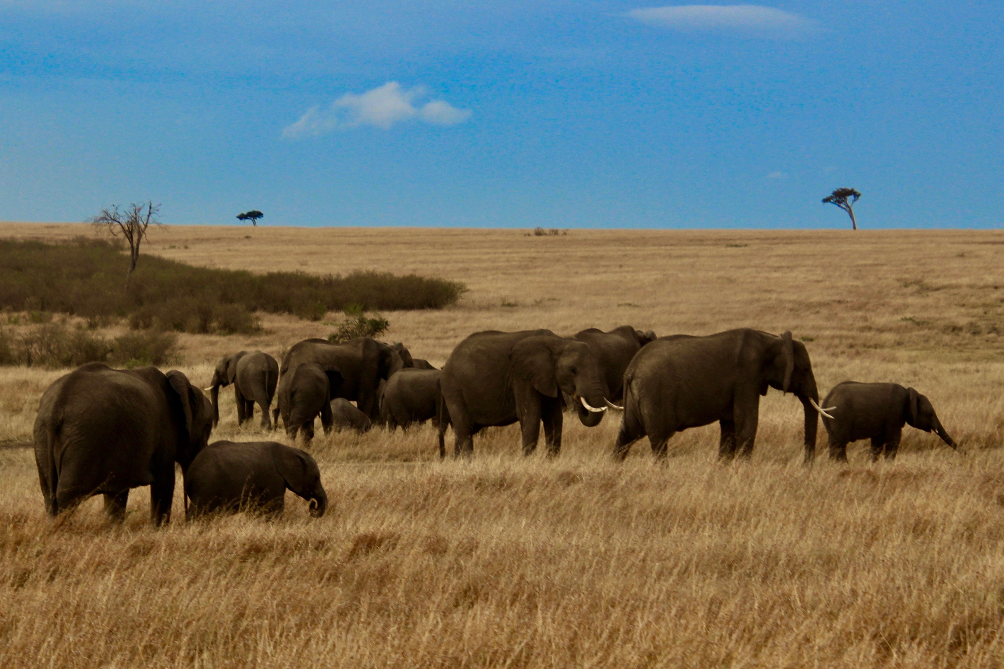 gcb-top five tz-elephants