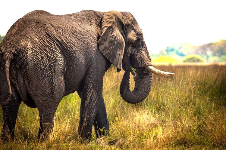 Botsawna-Safari-2elephant.jpg