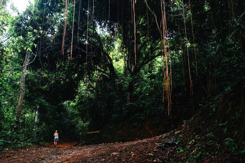 Costa Rica Tours - Hike through Corcovado National Park