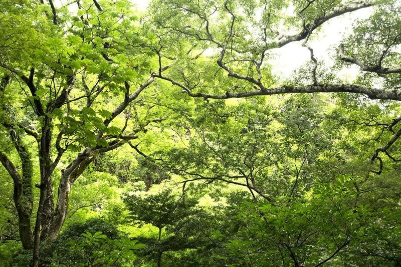 Zipline over Monteverde Cloud Forest - trips to costa rica