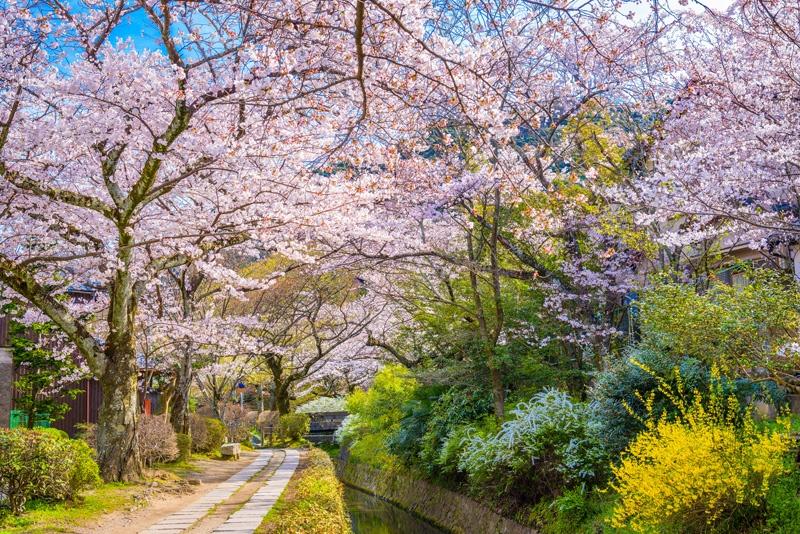 Kyoto-in-Spring