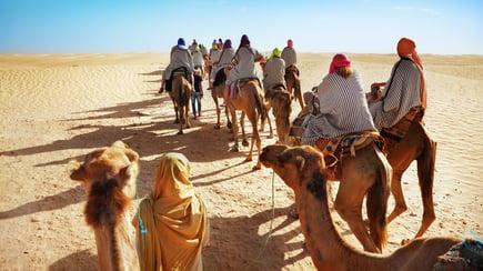 camels-large-sahara-desert-1.jpeg
