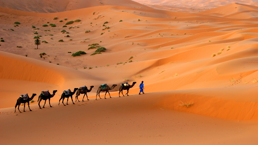 camels-large-sahara-desert.jpeg