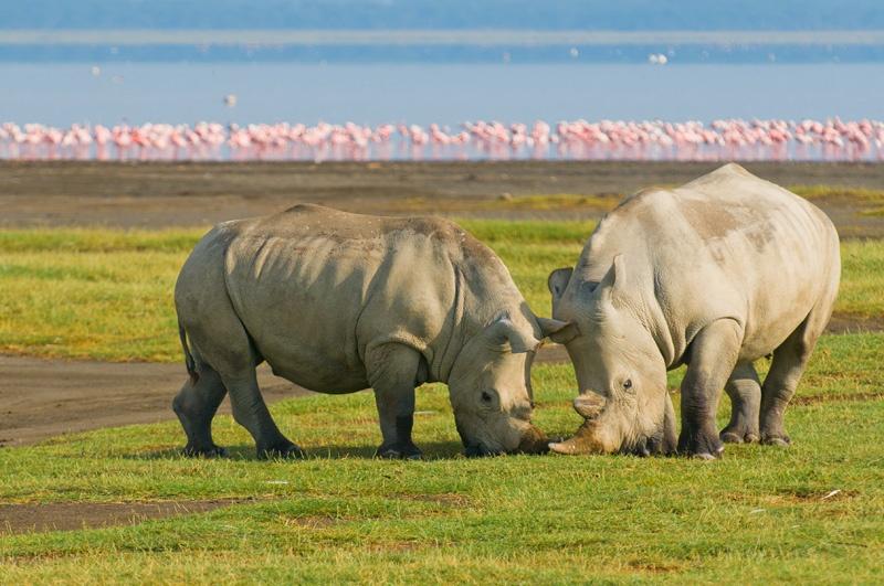 kenya-safari-tours2