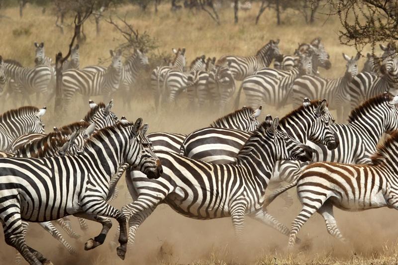 tanzania-safari-2.jpg