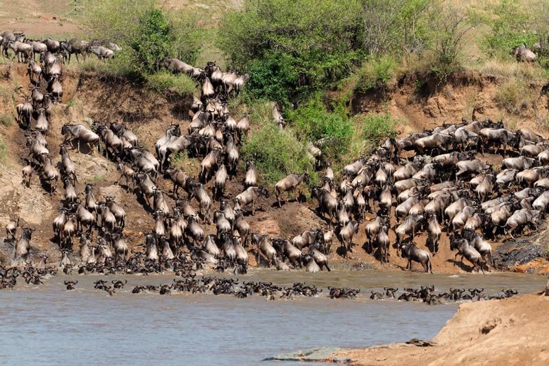 tanzania-safari-tours