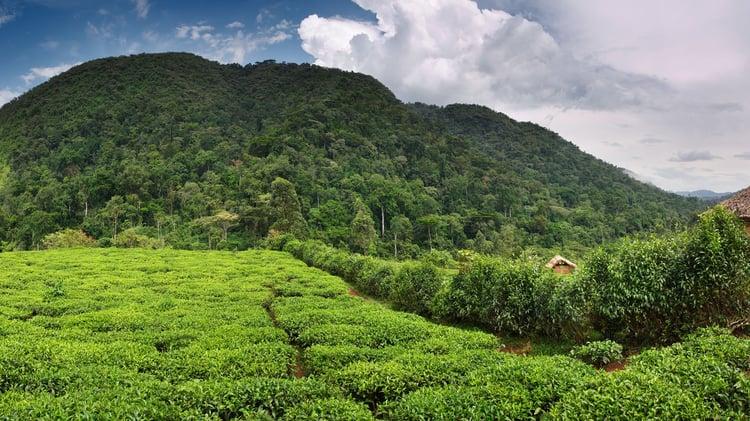 bwindi-landscape-large.jpeg