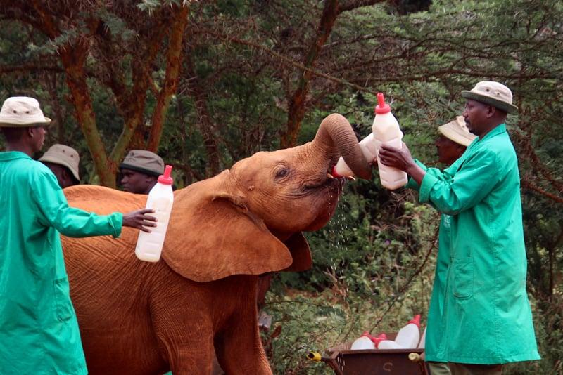 kenya-conservation-2020-sheldrick