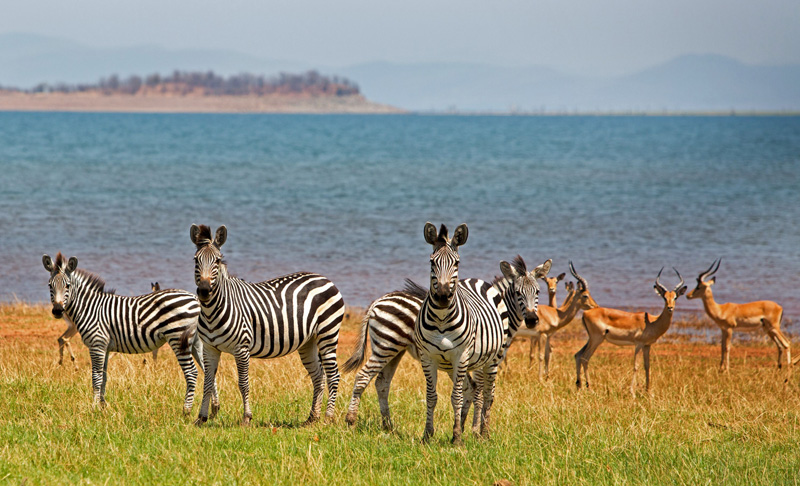 lake-kariba-wildlife-22439