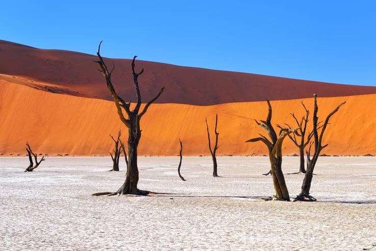 landscape-desert-sossusvlei-camelthorn-tree-15429.jpg