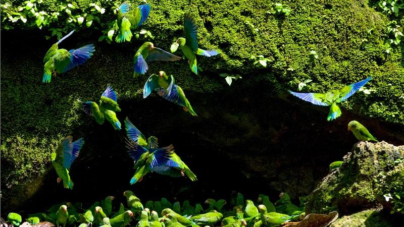 large-parrot-wildlife-yasuni-national-park.jpeg