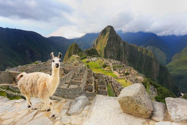 machu-picchu-llama-wildlife-13952