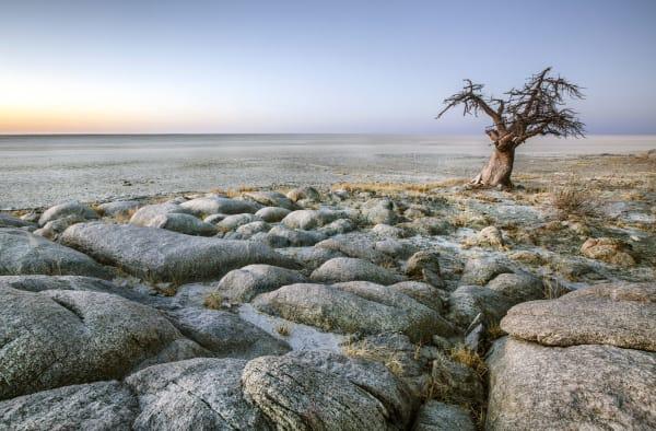 makgadikgadi-salt-pans-landscape-baobab-tree-15384