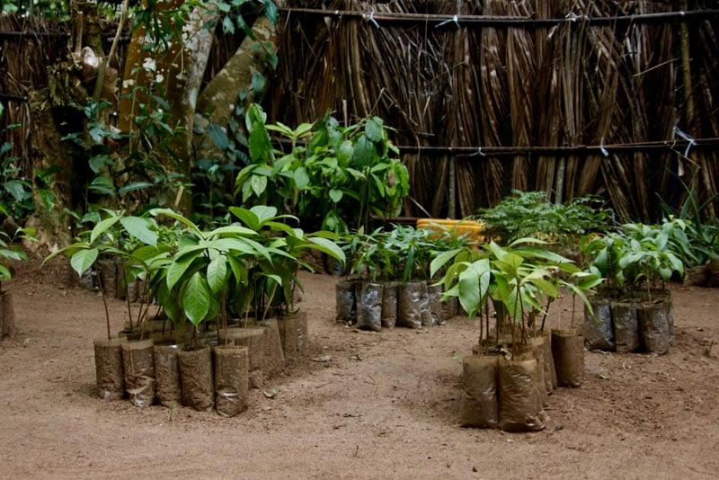 tree-seedlings