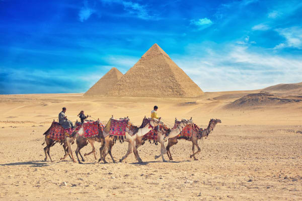 wildlife-camel-giza-great-pyramids-cairo-16165