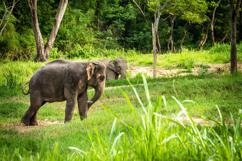 wildlife-elephant-14183.jpg