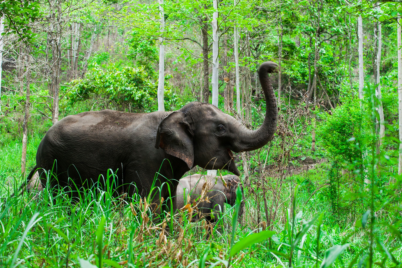 wildlife-elephant-14184.jpg