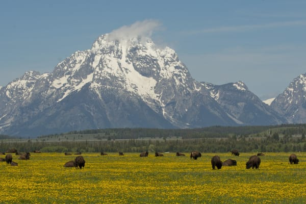 wyoming-grand-teton-national-park--47709