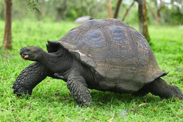 galapagos--giant-tortoise-santa-cruz-island-28114