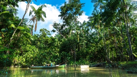 amazon-rainforest-landscape-large_555_312_s_c1_center_center_0_0_1.jpeg