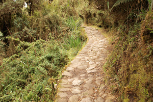 Section of the Inca Trail