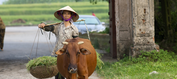 bigstock-Vietnamese-Woman-with-Water-Bu-22870931